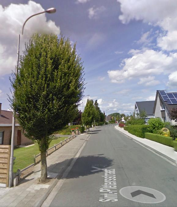 bomen_voor_de_kaalslag